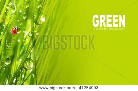 Fresh grass and little ladybug, natural background. Picture with space for your text.