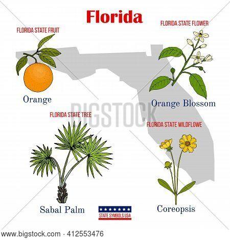 Florida. Set Of Usa Official State Symbols. Vector Hand Drawn Illustration