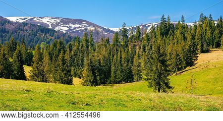 Mountainous Countryside In Spring. Rural Fields And Pastures In Green Grass. Spruce Forest On The Ro