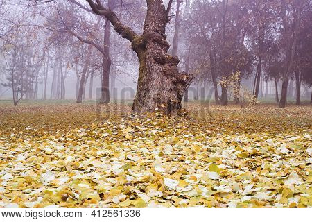 Front View Closeup Of Tilted Mistic Old Tree With Large Trunk And Dead Autumn Leaves On The Ground I