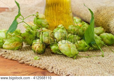 Heap Of Hop Cones Against The Bottom Part Of Lager Beer Glass On A Sackcloth, Fragment Close-up In S