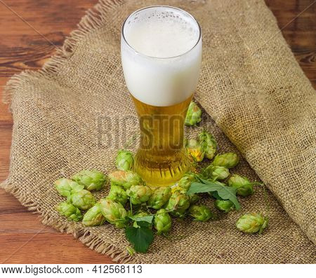 Lager Beer Glass Stand Among The Hop Cones On A Sackcloth On An Old Rustic Table
