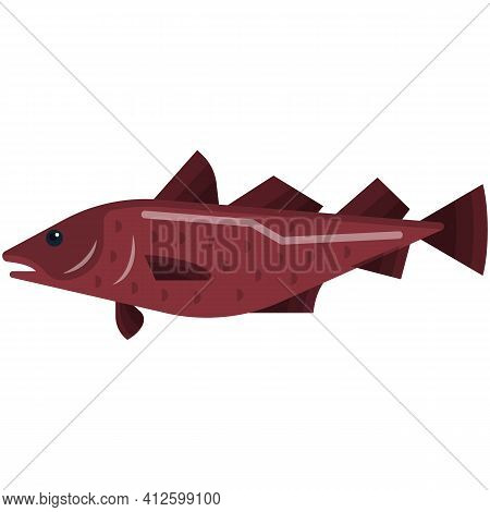 Cod Fish Vector Illustration Isolated On White