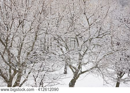 Snowy Forest. Winter Time. Idyllic White Nature Background. Postcard