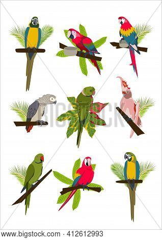 Tropical Hand Drawn Colorful Parrots Set With Plants And Leaves. Macaw, Cockatoo, Gray And Necklace