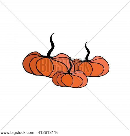 Vector Image Of Three Pumpkins On A White Background. Vector Illustration Of Pumpkins Of Different S