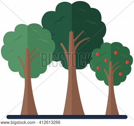 Deciduous Plants Isolated On White Background. Trees Collection. Trunks With Leaves And Branches