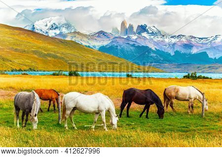 The famous Torres del Paine park in southern Chile. Lagoon Azul is amazing mountain lake at the foot of three rocks - torres. South American wild horses - mustangs graze on the grass.
