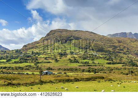 Panoramic Landscape With Mountains And Sheeps,  Galway County, Ireland