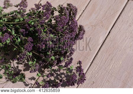 Fresh Flowering Branch Of Oregano Or Majoram Plants On Sunlit Wooden Table. Dehydrating Herbs For Ma