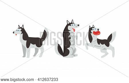 Siberian Husky Standing On Hind Legs And Playing Vector Set