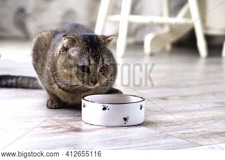 Brown Scottish Fold Cat Eating Food From A Bowl On A Wooden Floor