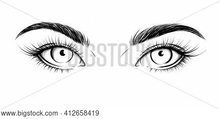 Eyes Looking Straight. Sexy Look. Fashion Illustration. Eye With Eyebrows And Long Eyelashes. Vector
