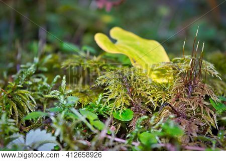 Forest Moss Natural Background Close-up. Close-up Of Freshness Green Moss