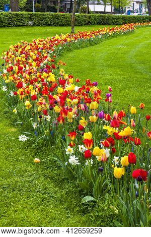 Rows Of Colourful Blooming Tulips In The Champ De Mars (field Of Mars), Public Park In Colmar City,