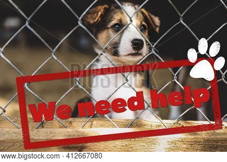 Cage With Homeless Dog In Animal Shelter. Concept Of Volunteering