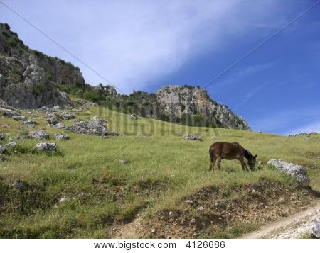 Horse Grazing In The Sierra SubbéTica