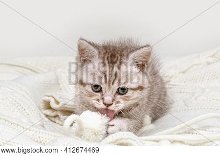 Small british kitten playing with a white ball