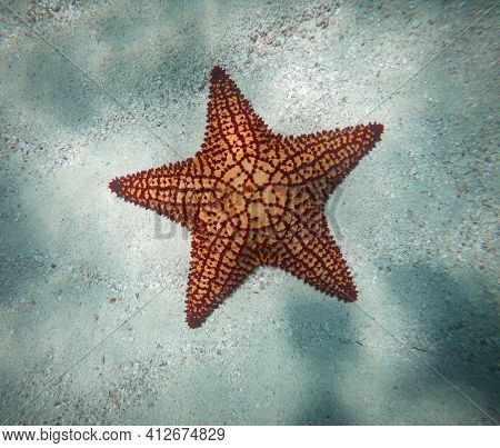 Huge Red Starfish Underwater On The Sand . Concept Of Holiday, Vocation And Relaxing