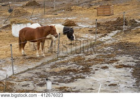 Horses On The Farm In An Outdoor Enclosure On A Spring Time.