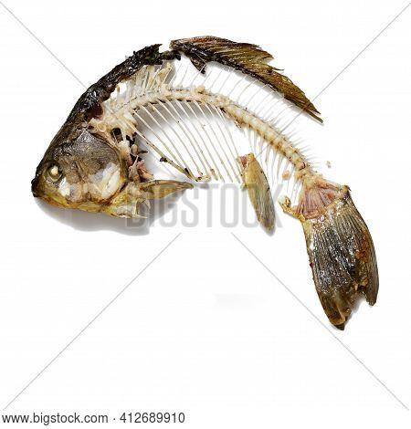 Fish Skeleton That Was Eaten, Leftovers Of Food. Bones Crucian Carp Isolated