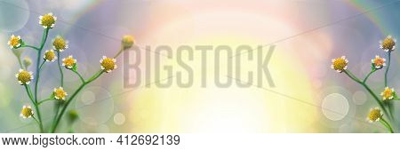 Blurred Natural Background. Beautiful Floral Spring Abstract Nature Background. Small Flowers On A G