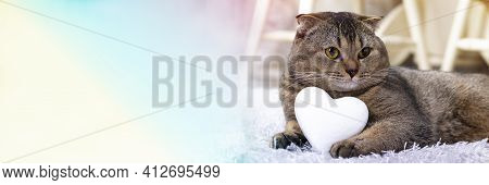 Brown Scottish Fold Cat With White Heart Between Paws On The Carpet. Heart As A Symbol Of The Search
