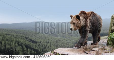 Brown Bear On A Rock, Against The Background Of A Wild Forest