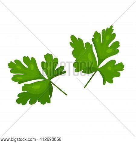 Parsley Leaves Fresh Herbs Isolated On White Background Parsley,illustration Of Parsley On White Bac