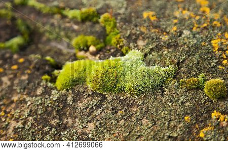 Green Moss On The Stone. Green Mold On A Gray Old Rock. Natural Background Texture. Texture Of A Sto