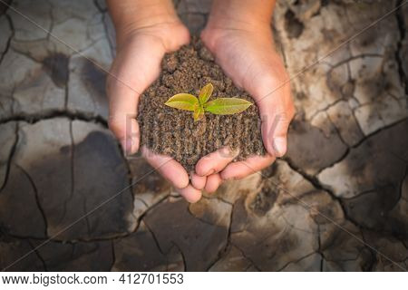 Two Hands Holding A Little Green Tree Plant With Soil On The Background Of Dry And Cracked Soil, Pla
