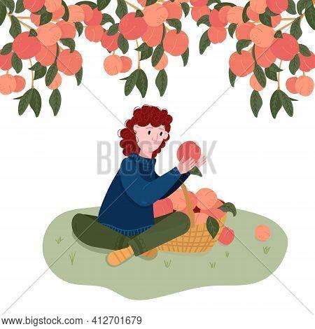 Woman Pick Fruits In Basket. Gardener Pluck Peach In Garden. Girl Sit Under Peach Tree. Organic Loca