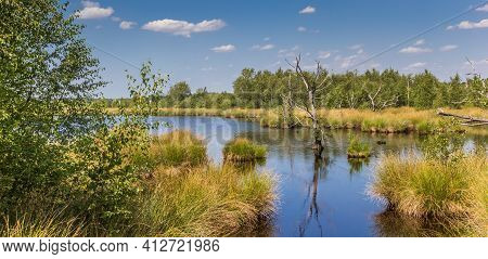 Panorama Of Wetlands Of The National Park Dwingelderveld In Drenthe, Netherlands