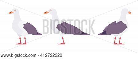 Grey Gulls, Seagulls Wildlife Seabirds And Marine Set. Wildlife Study, Ornithology And Birdwatching
