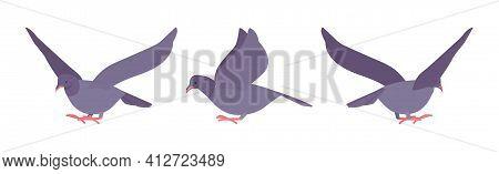 Grey Pigeons, Doves Set, Domestic Or Street Bird In Flight. Wildlife Study, Ornithology And Birdwatc