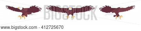 Bald Eagle Set, Large Powerful Bird, Massive Wings In Flight. Wildlife Study, Ornithology And Birdwa