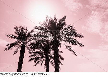 Tropical Tourism Paradise Palms In Sunny Summer Sun Red Sky. Sun Light Shines Through Leaves Of Palm