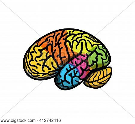 Brain Parts With Gyrus, Colored Atlas Side View, Cartoon Vector Illustration. Brain Colored Segments