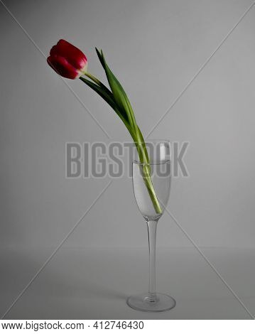 Beautiful Red Tulip Standing In A Glass Of Water. Low Key Photo. Concept Of Loneliness, Melancholy,