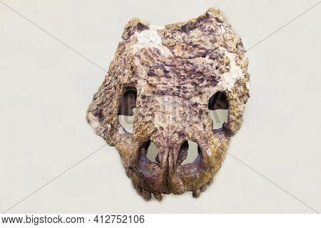 The Skull Of The Pareiasaurus Proelgenia (latin: Proelginia Permiana) On A White Background. Paleont