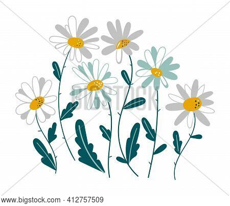 Set Of Isolated Chamomile. Medicinal Plant Daisy Chain Vector Illustration. Set Of Spring Colorful F