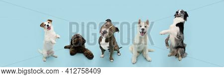 Banner Group Of Five Dogs Summer And Spring. Obedience Training Concept. Jack Russell, Bully, Poodle