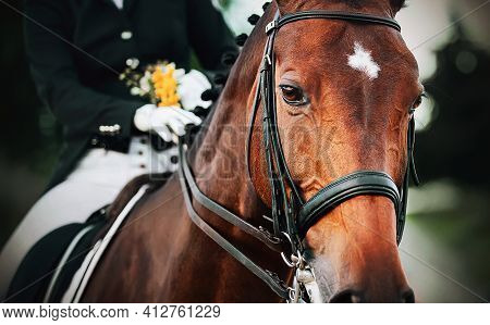 Portrait Of A Beautiful Bay Horse With A Braided Mane And A Rider In The Saddle, Who Holds The Bridl