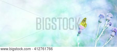 Summer Background - Silver-washed Fritillary Butterfly Sits On A Greater Knapweed Flower. Selective