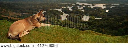 Amazing view of Ta Dung lake, dog on the foreground. Vietnam. Panorama landscape