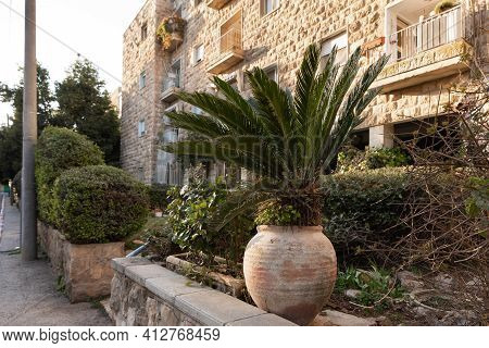 Evening View Of A Palm Tree In A Large Jug And Green Ornamental Shrubs On Benjamin Disraeli Street I