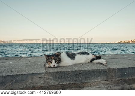 Street Cat Lying On Seafront Under Cloudless Sky.