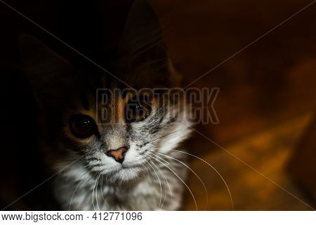 Cute Kitten Sits In Shade And Looks At Light. Portrait Of Gray Tabby Kitten. The Cat Is Sitting On F