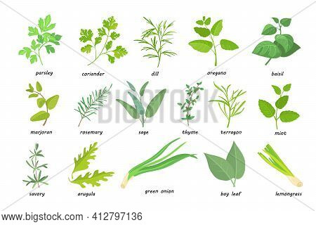 Creative Green Popular Culinary Herbs Flat Pictures Set. Cartoon Thyme, Parsley, Rosemary, Sage, Cor