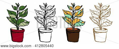 Ficus Plant In Different Styles. Vector Doodle Houseplants Set In Outline, Monochrome And Coloring O